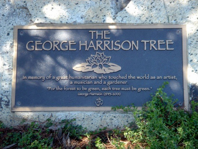 george-harrison-tree