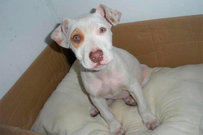 perros-en-adopcion-02