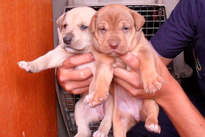 perros-en-adopcion-03