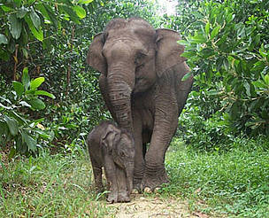 elefants_53526